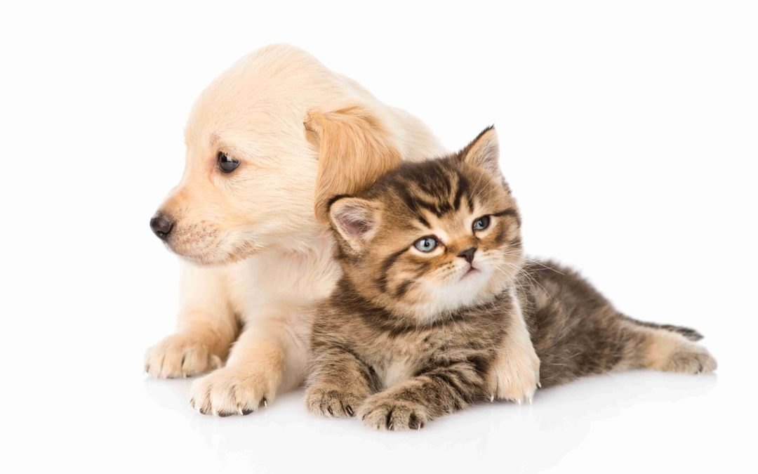 Polizza cani e gatti tutela i tuoi amici