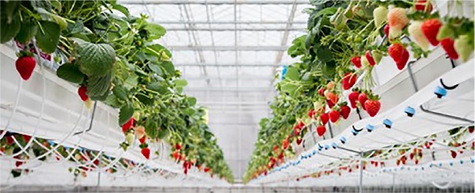 agricoltura-canciani-assicurazioni-globale-serre